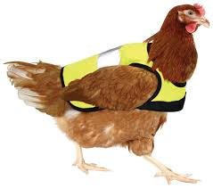 Chicken get jackets