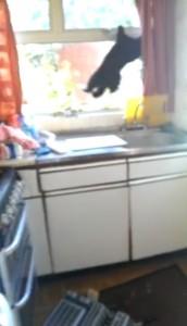 Devil cat  YouTube  Matt