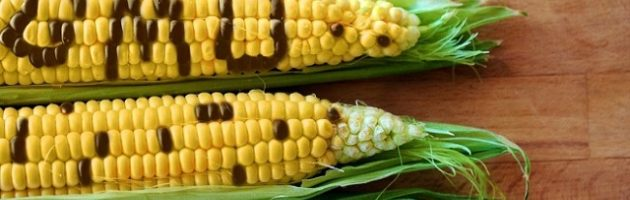 Banasayansi bazeemu okubanja ebbago lya Genetic Engineering regulatory bill
