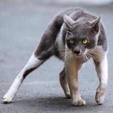 cat scares