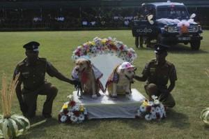 Sri Lanka Dogs Wedding