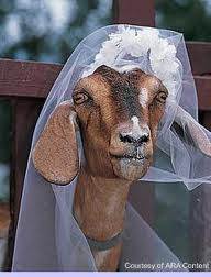 man weds