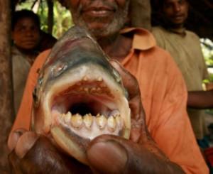 testacle eating fish