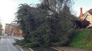 tree hits